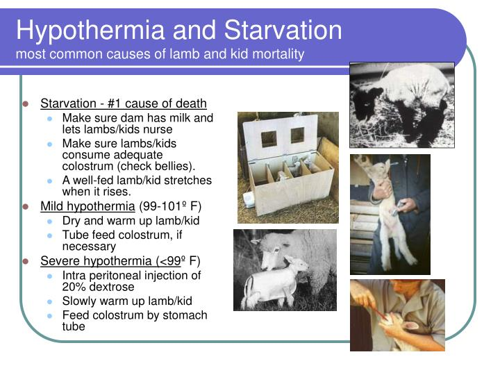 Starvation - #1 cause of death