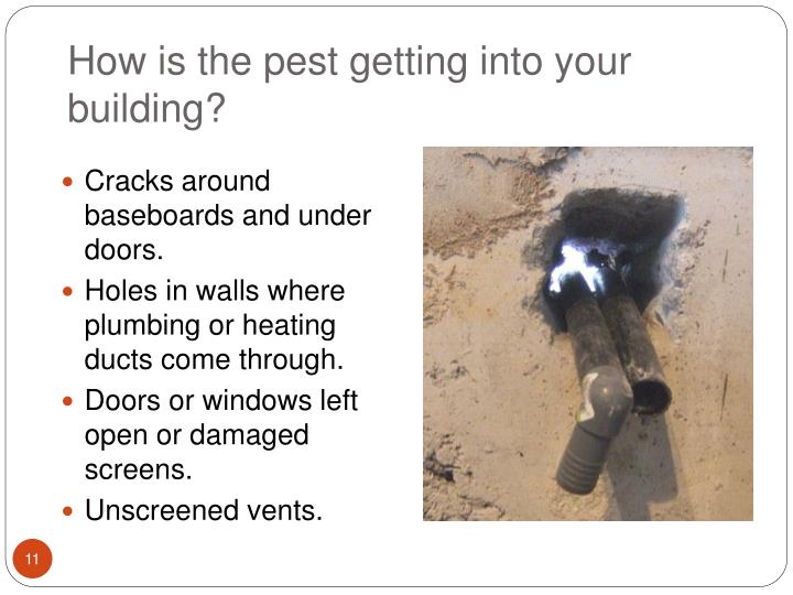 How is the pest getting into your building?