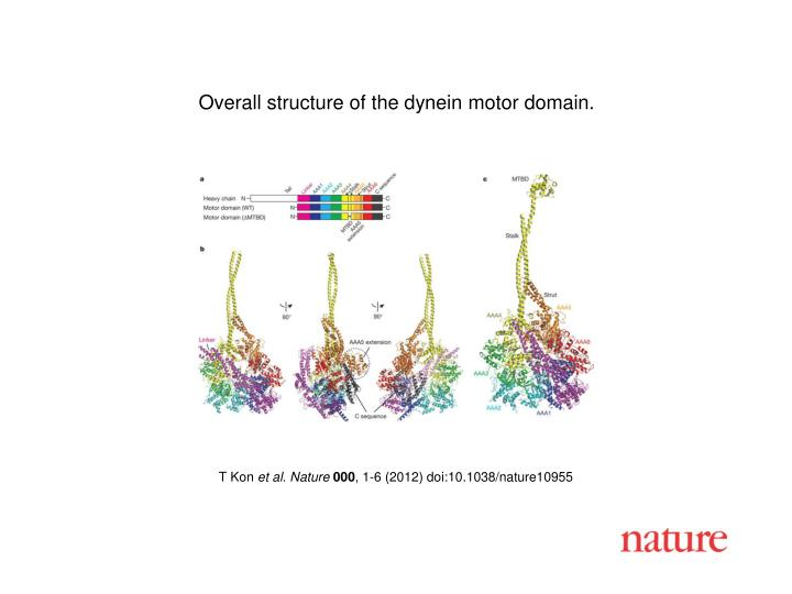 Overall structure of the dynein motor domain.