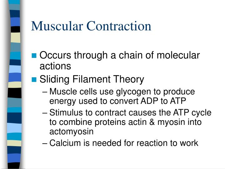 Muscular contraction