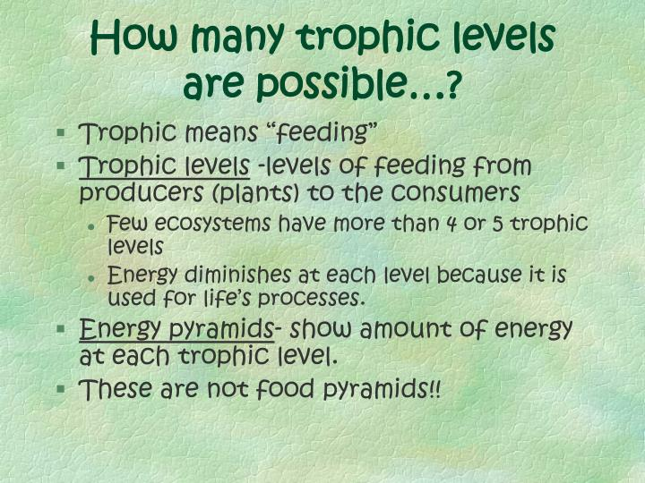 How many trophic levels are possible…?
