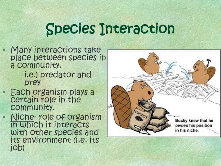 Species Interaction