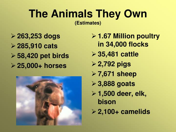 263,253 dogs