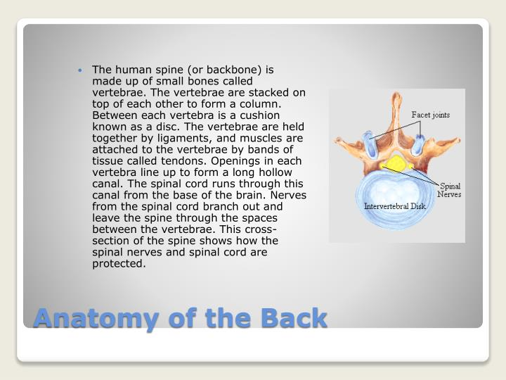 Anatomy of the back