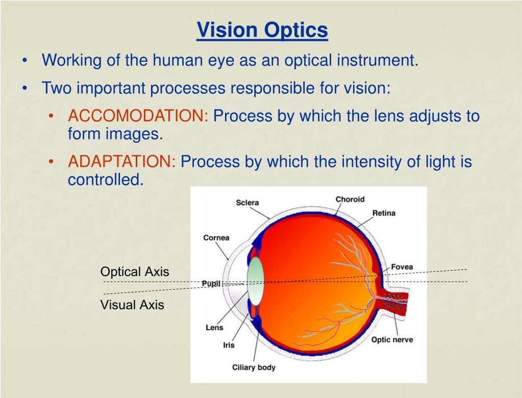 Vision Optics