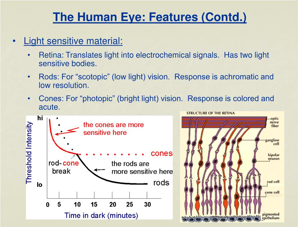 The Human Eye: Features (Contd.)