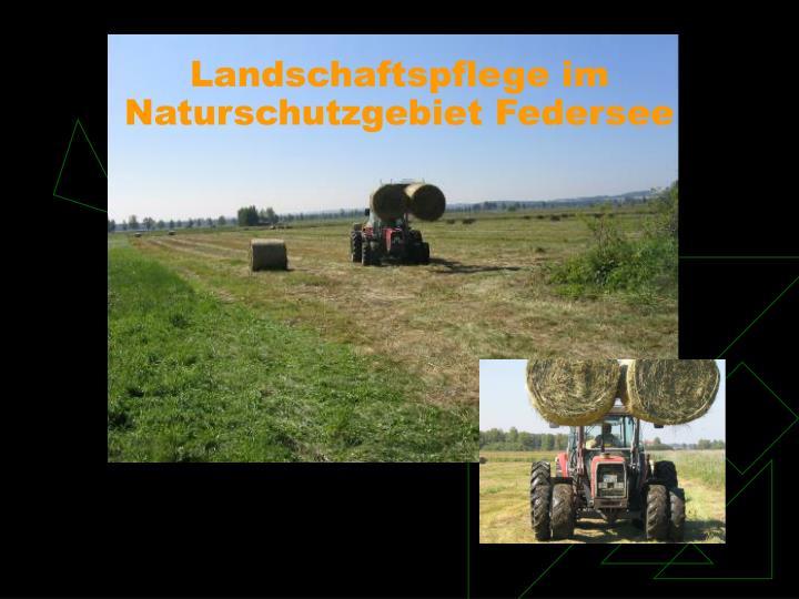 Landschaftspflege im Naturschutzgebiet Federsee