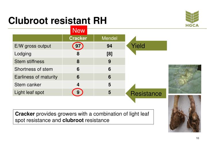 Clubroot resistant RH