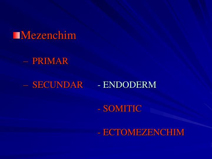 Mezenchim