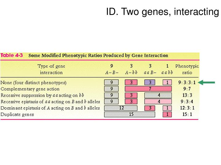 ID. Two genes, interacting