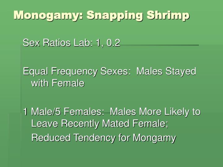 Monogamy: Snapping Shrimp