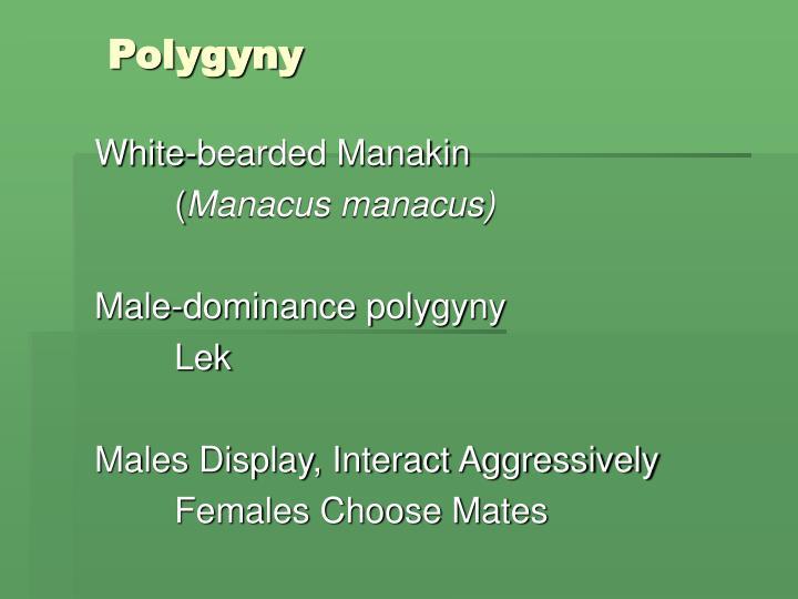 Polygyny1