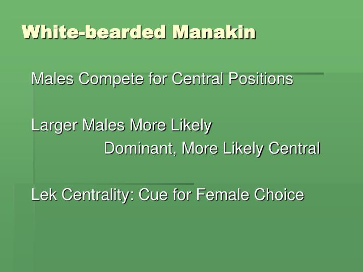 White-bearded Manakin