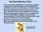 old world monkey traits