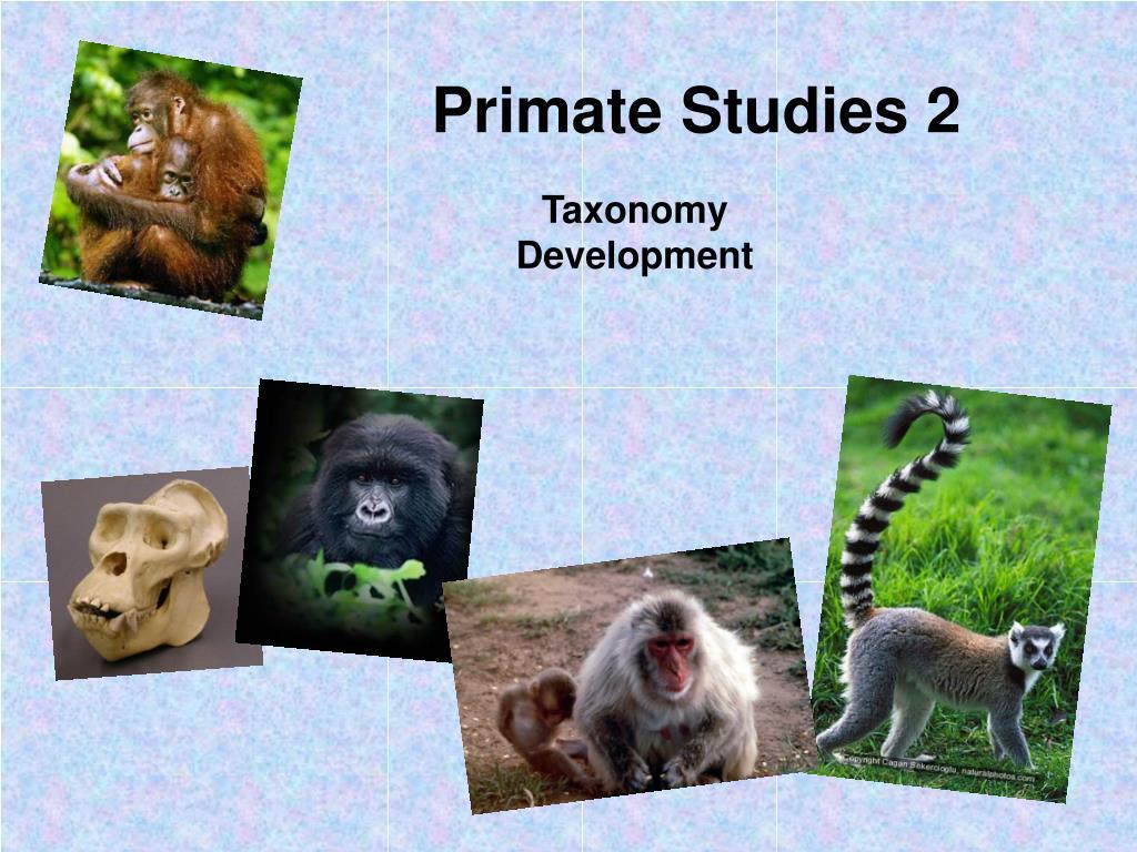 primate studies 2 l.