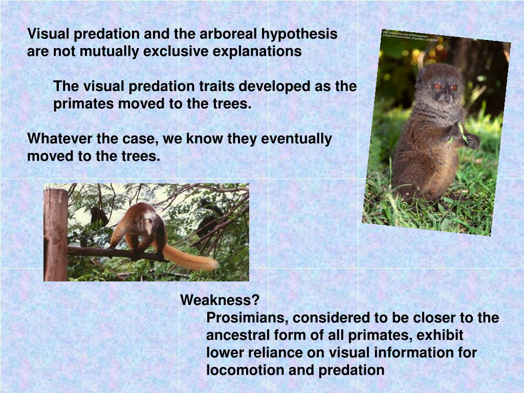 Visual predation and the arboreal hypothesis are not mutually exclusive explanations
