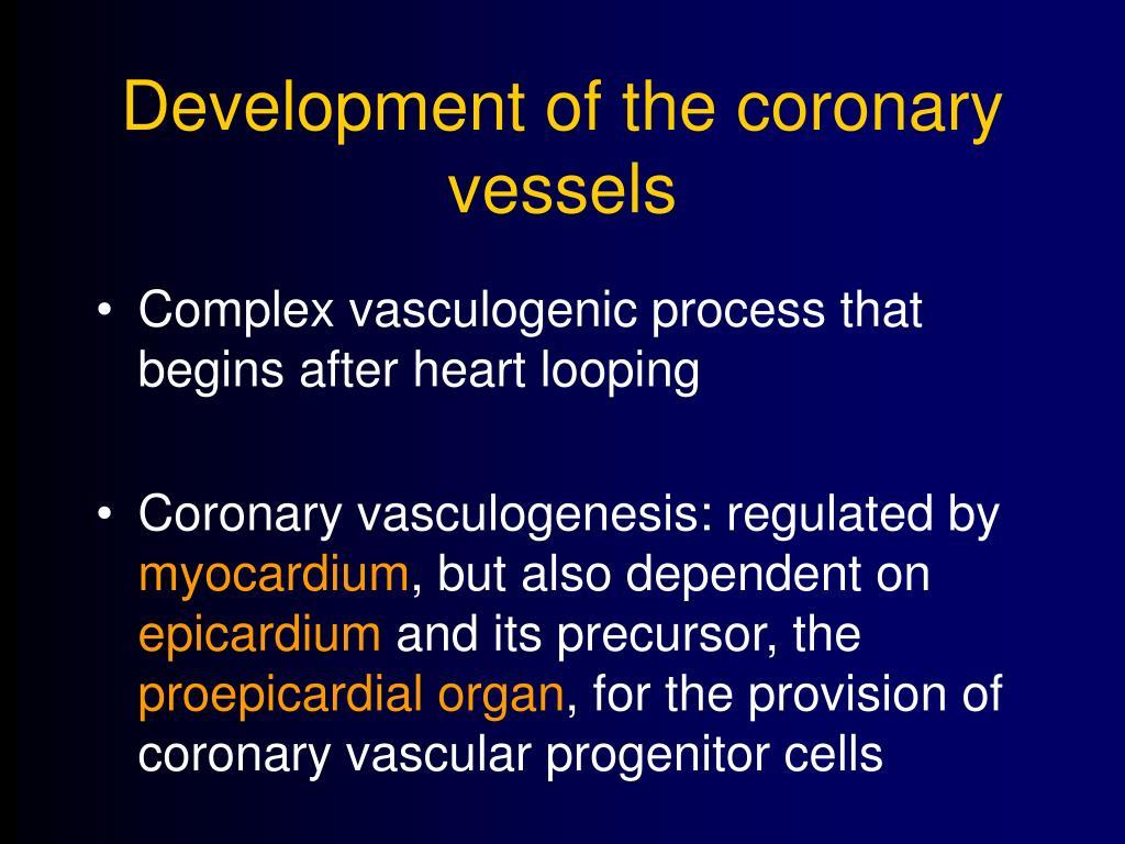 Development of the coronary vessels