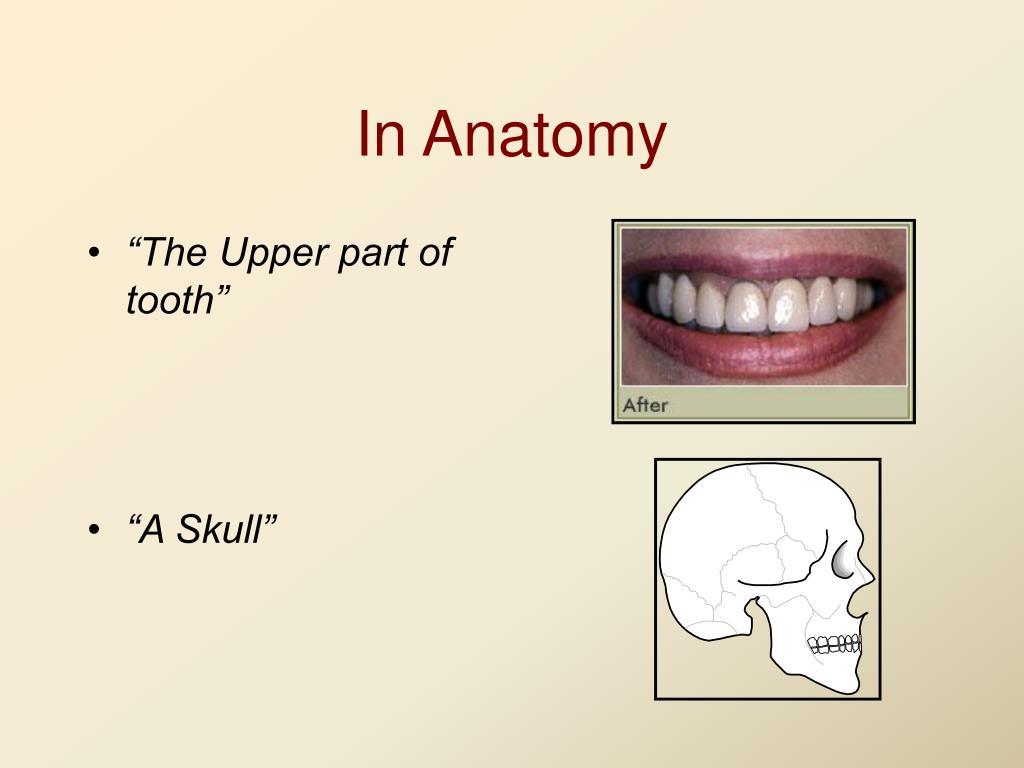 In Anatomy