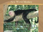 new world monkey