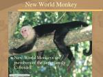 new world monkey36