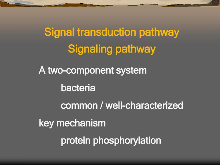 Signal transduction pathway