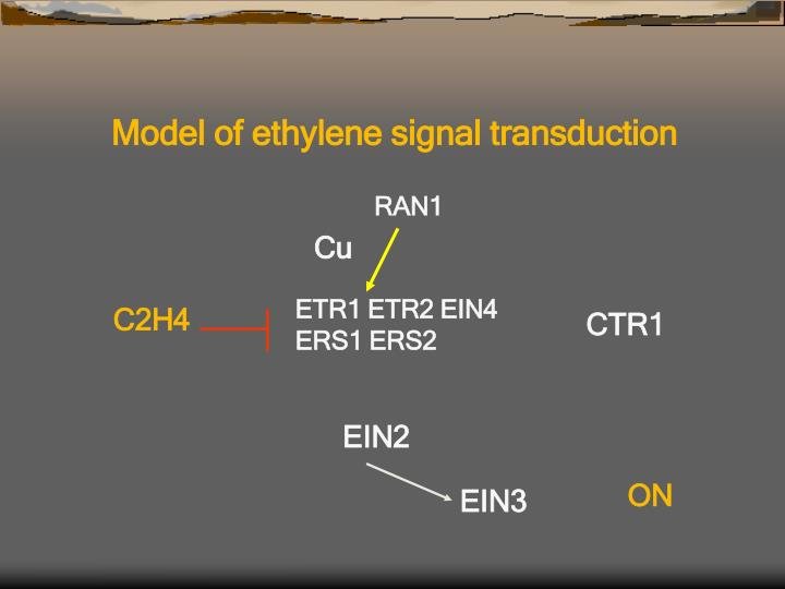 Model of ethylene signal transduction