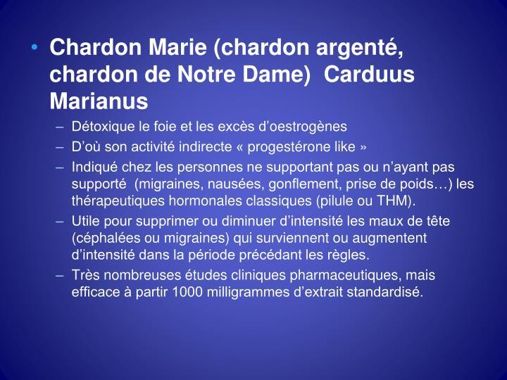 Chardon Marie (chardon argenté, chardon de Notre Dame)  Carduus Marianus