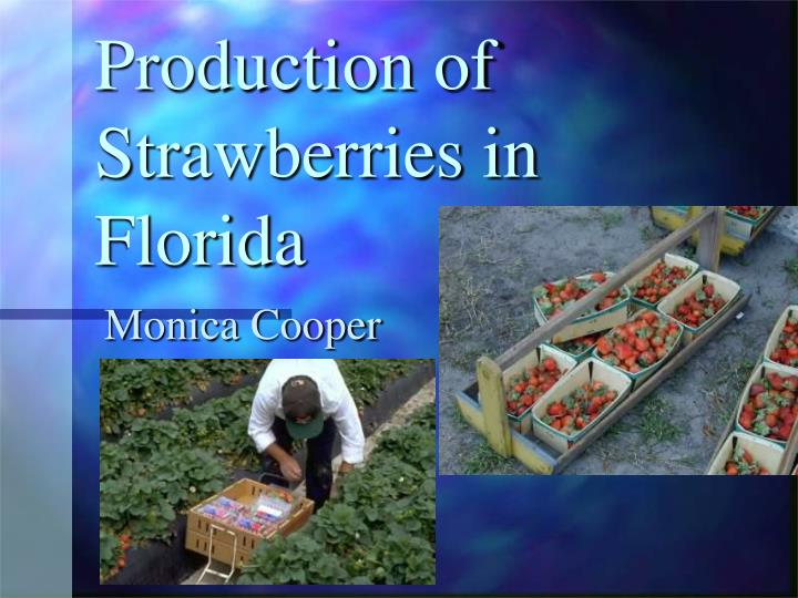 production of strawberries in florida n.