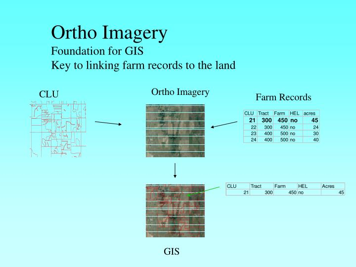 Ortho Imagery