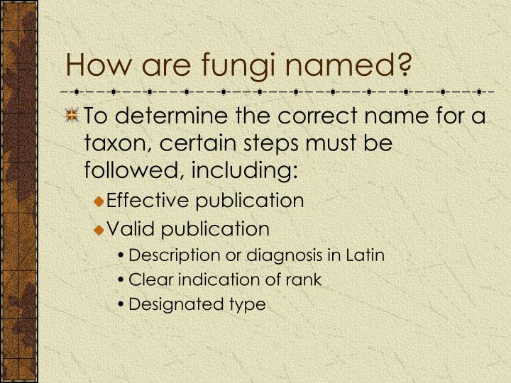 How are fungi named?