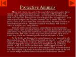 protective animals