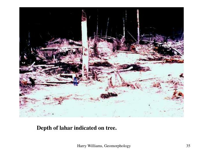 Depth of lahar indicated on tree.