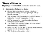 skeletal muscle physiology of contraction contraction relaxation cycle