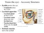 vision the eye accessory structures