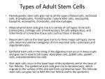 types of adult stem cells