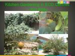 kitchen gardening in ecd centres kot addu