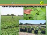 garalo jatropha seedlink and field test station