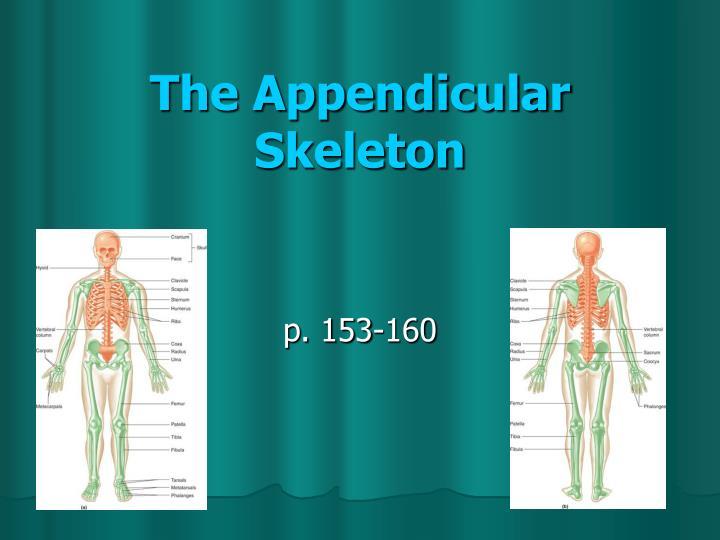 the appendicular skeleton n.