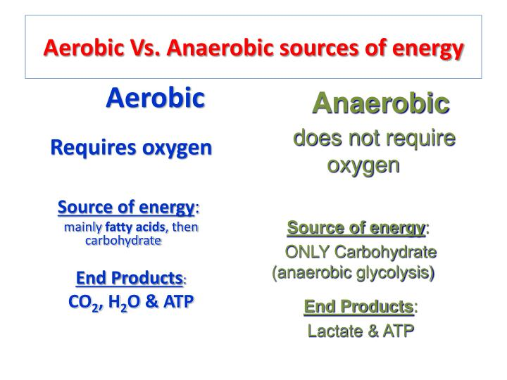 Ppt Aerobic Amp Anaerobic Metabolism In Muscles Powerpoint