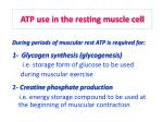 atp use in the resting muscle cell