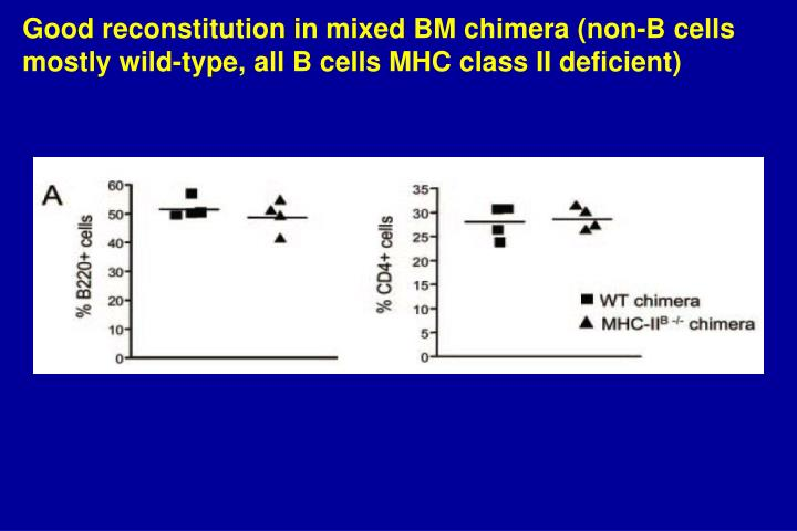 Good reconstitution in mixed BM chimera (non-B cells mostly wild-type, all B cells MHC class II deficient)