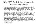 1856 1857 cattle killing amongst the xhosa in south africa