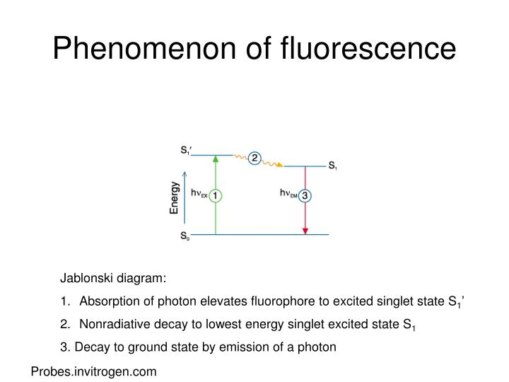 Ppt fluorescence and filters powerpoint presentation id1413005 phenomenon of fluorescence jablonski diagram ccuart Choice Image