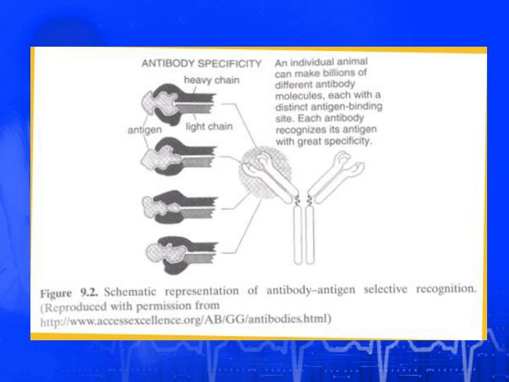 Antibody-antigen