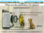 what are the guidelines for animal experimentation