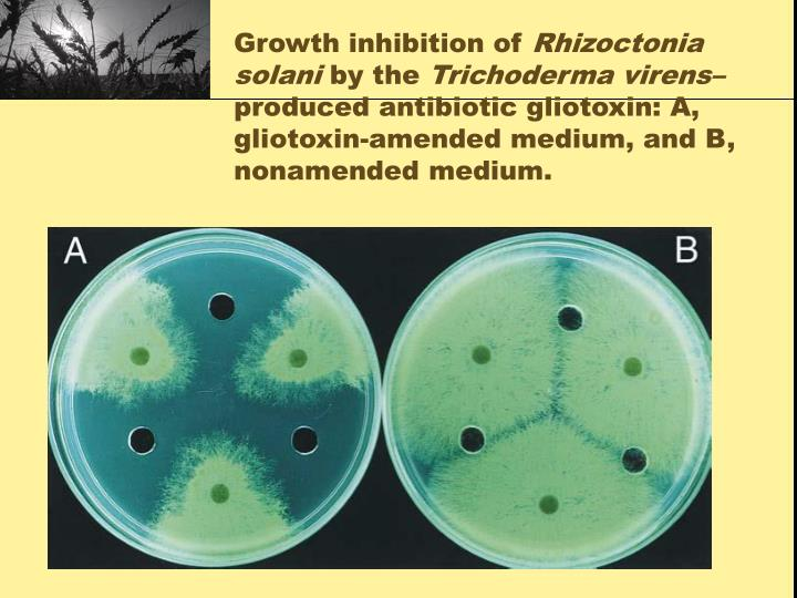 Growth inhibition of