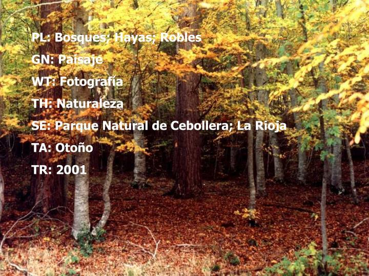 PL: Bosques; Hayas; Robles