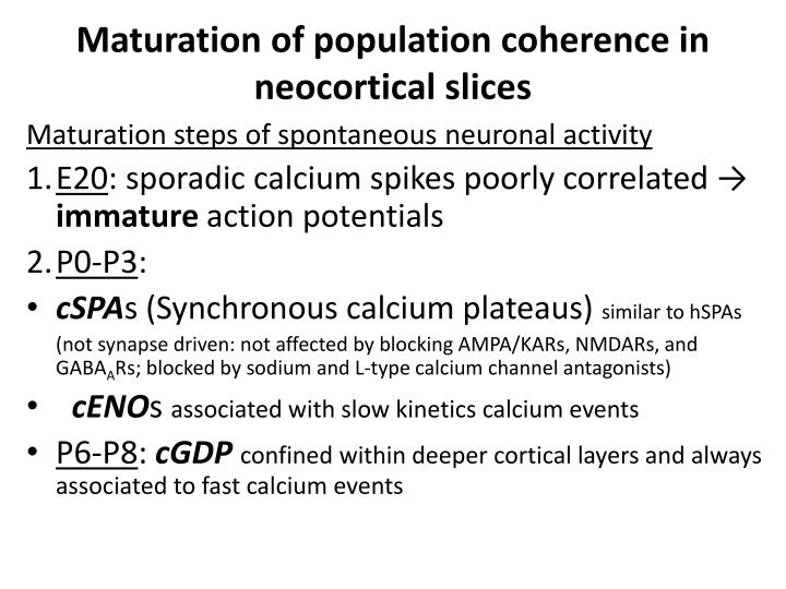 Maturation of population coherence in neocortical slices
