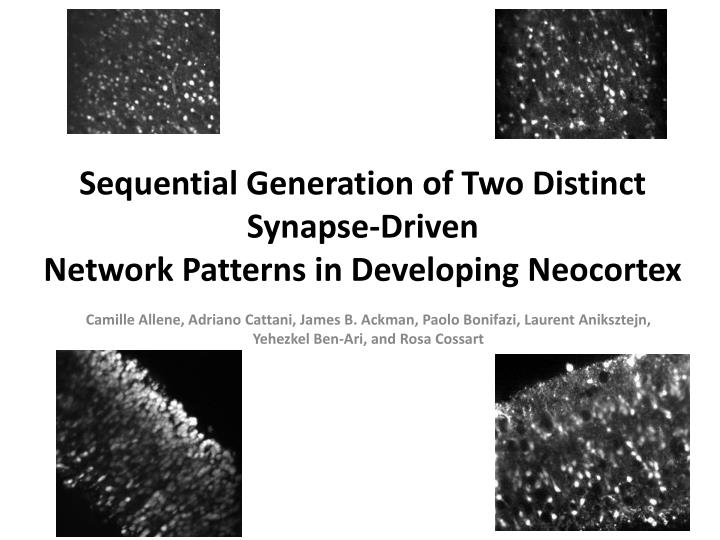 sequential generation of two distinct synapse driven network patterns in developing neocortex n.