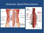 anatomy spinal musculature